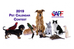 Pet Calendars Are In!! Order Yours Now!